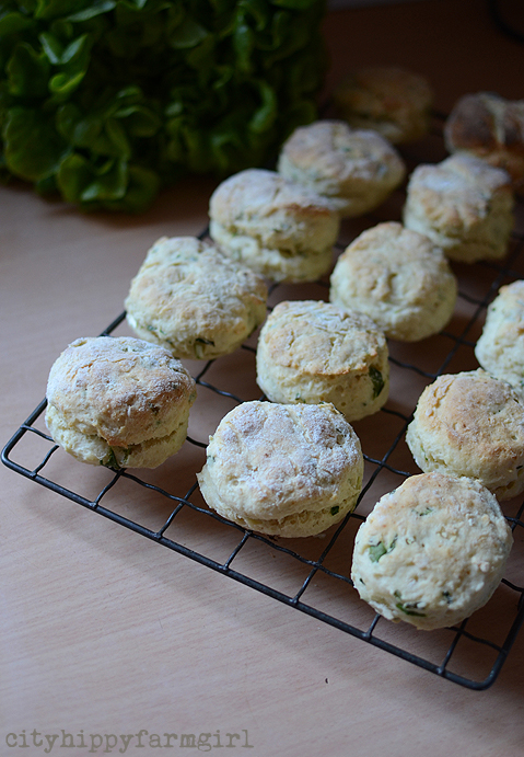 sour cream and chive scones
