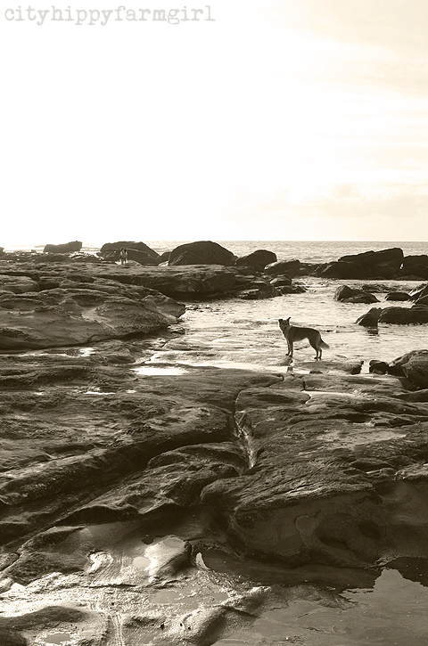 old sea dog- cityhippyfarmgirl