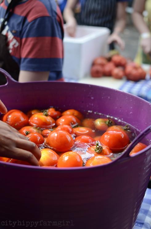 tomatoes||cityhippyfarmgirl