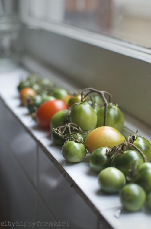 tomatoes || cityhippyfarmgirl