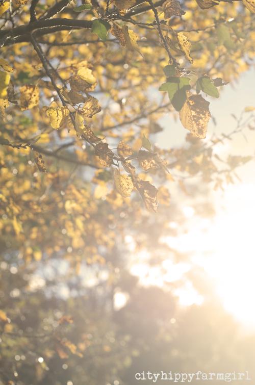autumn leaves || cityhippyfarmgirl