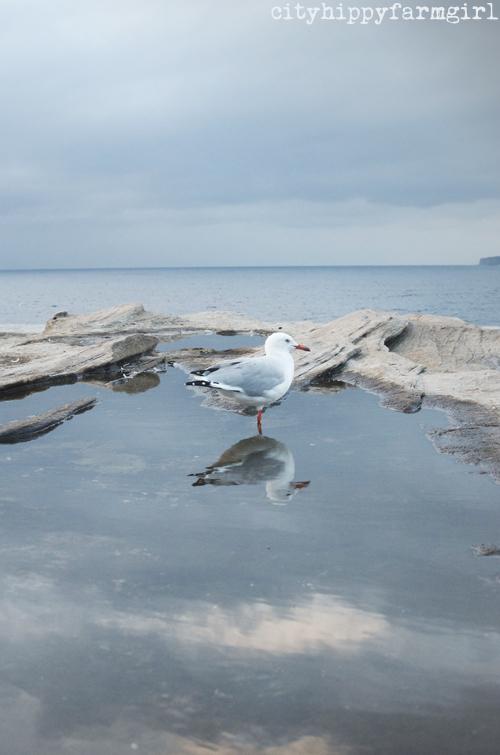 seagull- take 3 || cityhippyfarmgirl