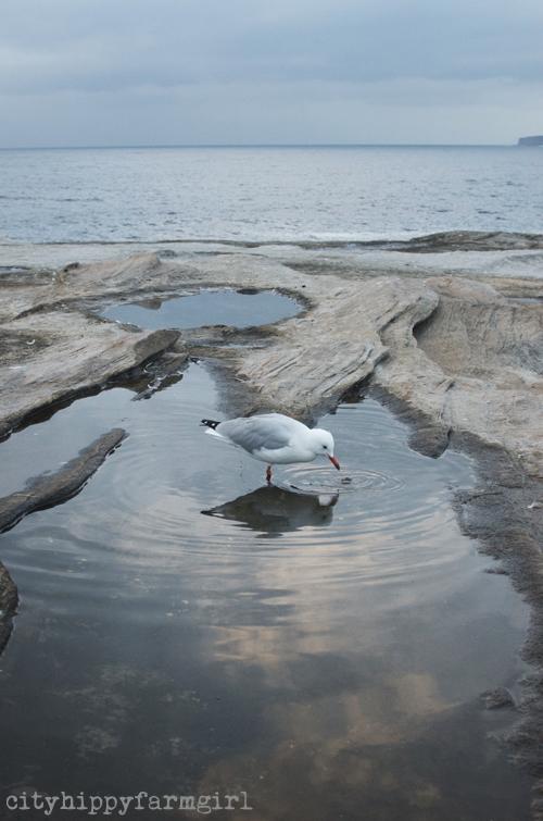 seagull take 3 || cityhippyfarmgirl