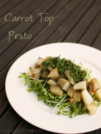 carrot top pest recipe || cityhippyfarmgirl