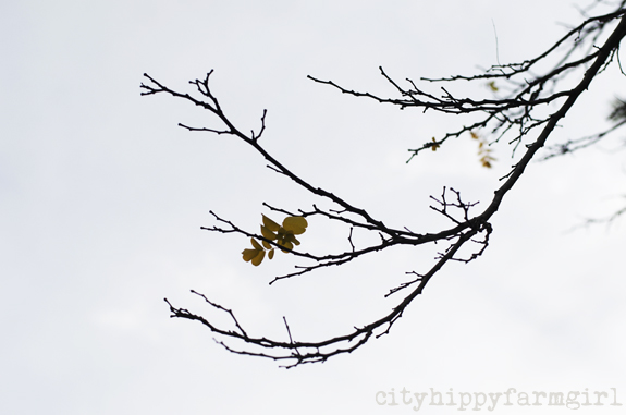 wintry tree || cityhippyfarmgirl