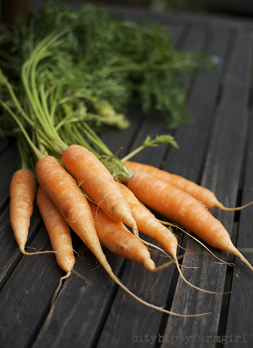 carrots || cityhippyfarmgirl