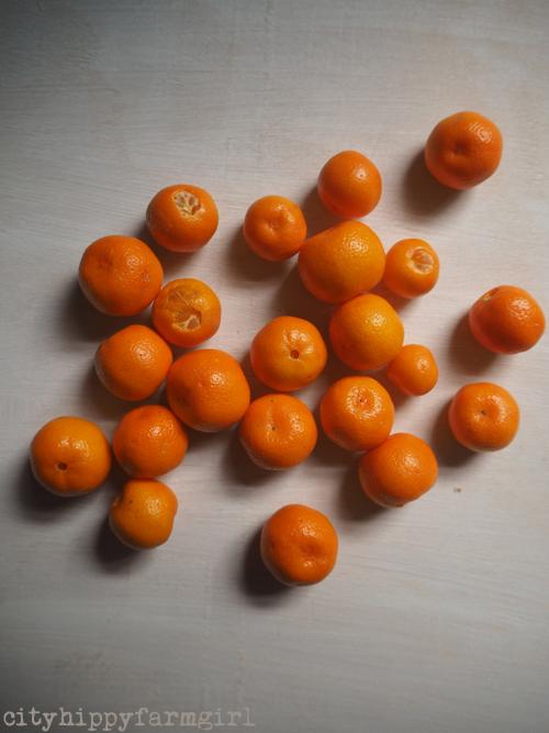 cumquats || cityhippyfarmgirl