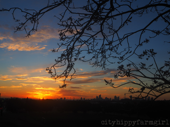 Sydney sunset || cityhippyfarmgirl