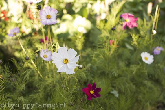 flowers || cityhippyfarmgirl