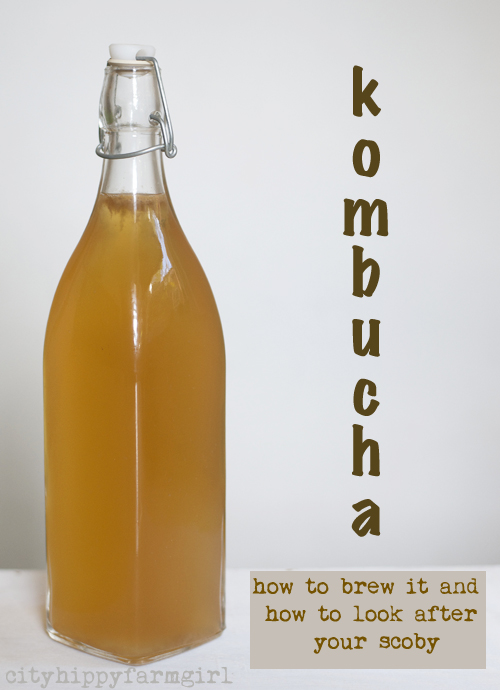 kombucha- how to brew it and how to look after your scoby || cityhippyfarmgirl