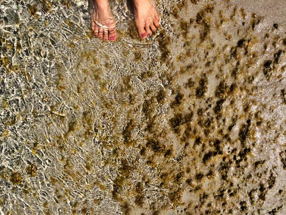 Ocean Toes- Ecolosophy