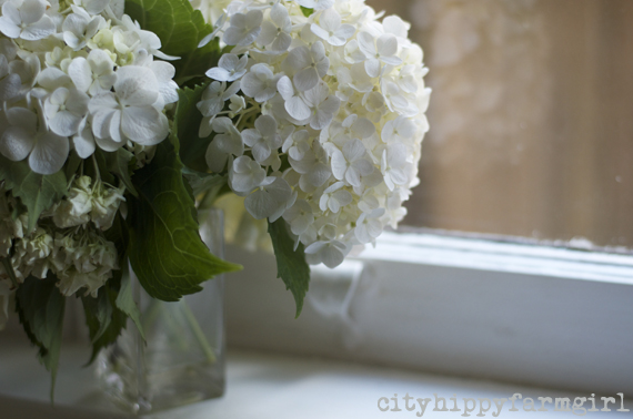 window sill flowers || cityhippyfarmgirl