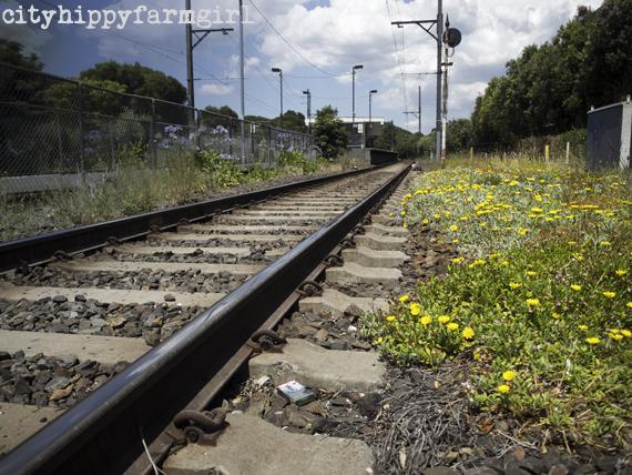 tracks || cityhippyfarmgirl