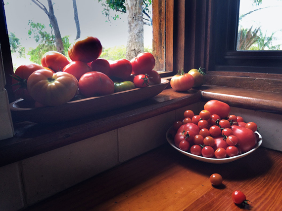 tomato window sill- ecolosophy