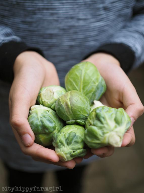 brussel sprouts || cityhippyfarmgirl