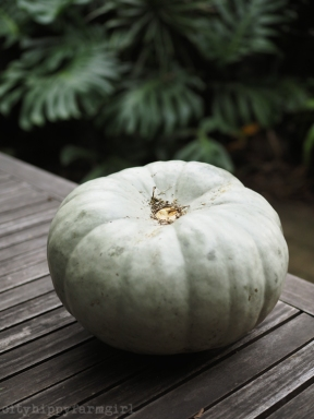 pumpkin: know your basics || cityhippyfarmgirl