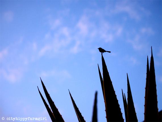 little bird sings || cityhippyfarmgirl