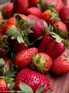 seasonal strawberries