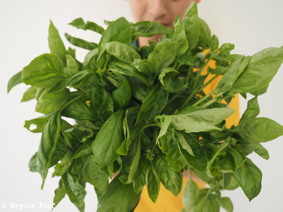bunches of basil || cityhippyfarmgirl