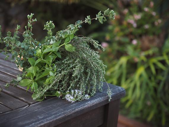 herbs || cityhippyfarmgirl.com