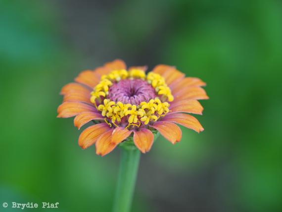 flower 01 || cityhippyfarmgirl