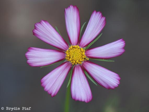 flower 02 || cityhippyfarmgirl