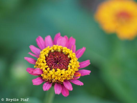 flower 03 || cityhippyfarmgirl