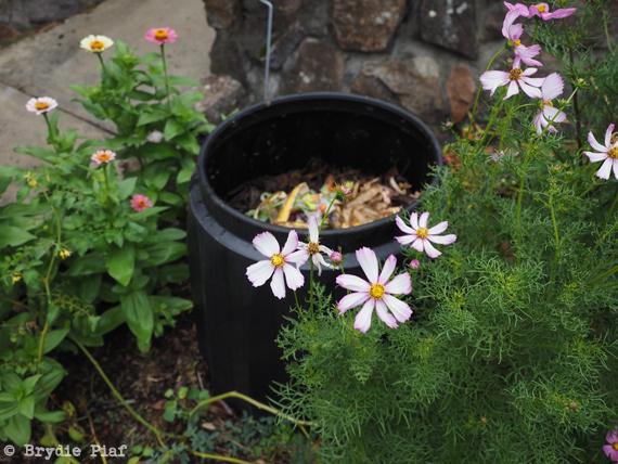 compost || cityhippyfarmgirl