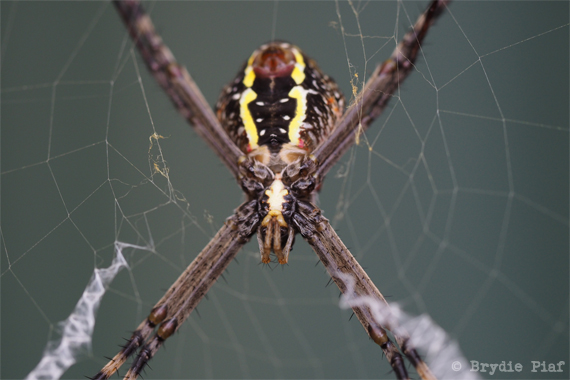 spider || cityhippyfarmgirl