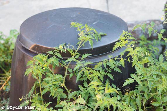 composting 101 || cityhippyfarmgirl