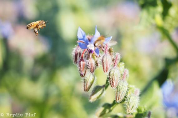 honey-bee-cityhippyfarmgirl