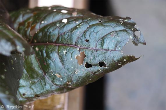slugs 02 || cityhippyfarmgirl.com
