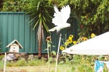 cockatoo-brydie-piaf